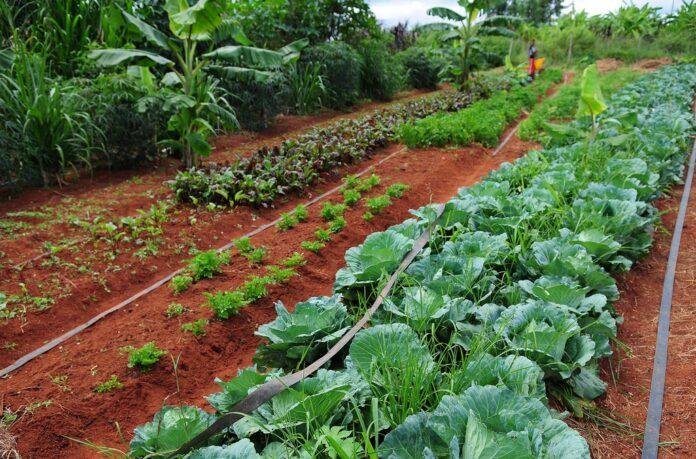 AgroArt, museo de arte virtual que muestra la riqueza de la agricultura en América