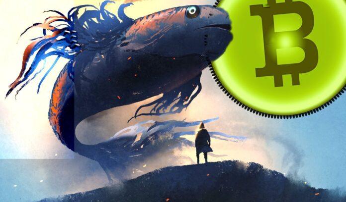 Ballenas Bitcoin en las últimas horas movilizan 73.810 BTC