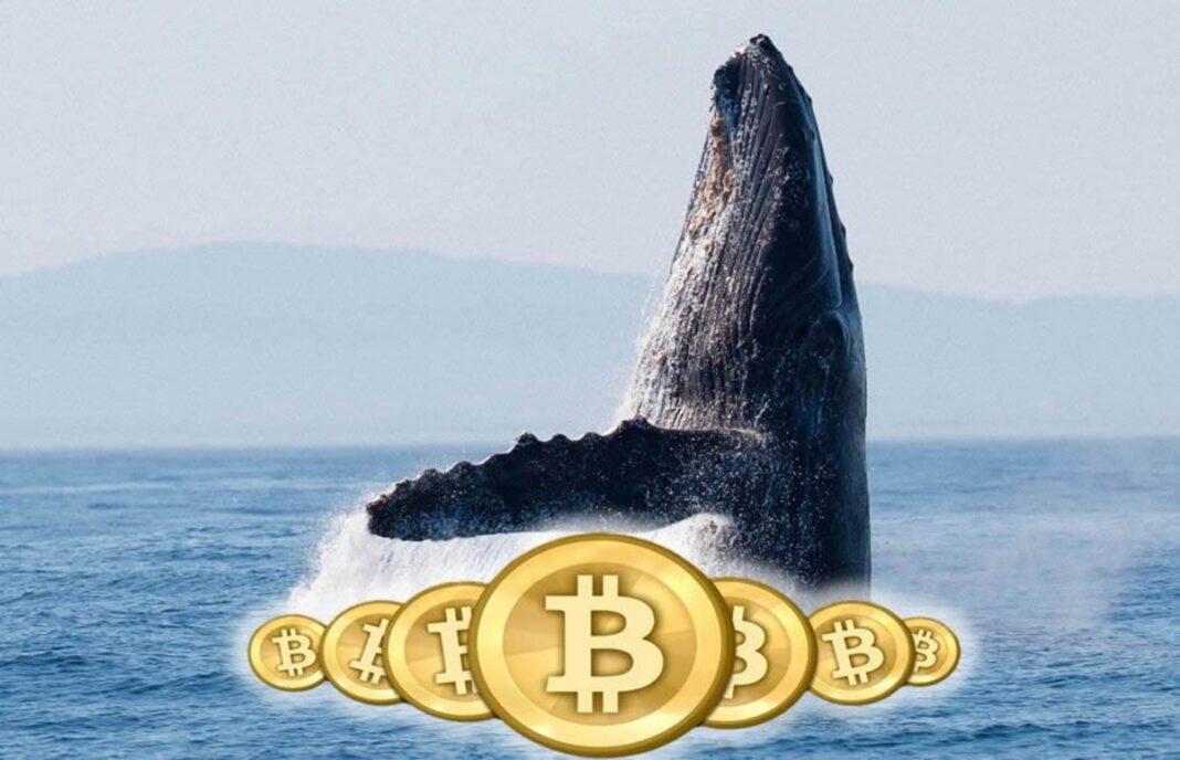 Bitcoin no está tan concentrado como se cree pero las ballenas SI han acumulado más según este estudio