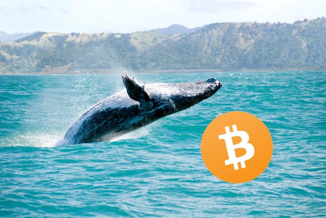 Cómo iniciaron el mes de febrero las ballenas Bitcoin