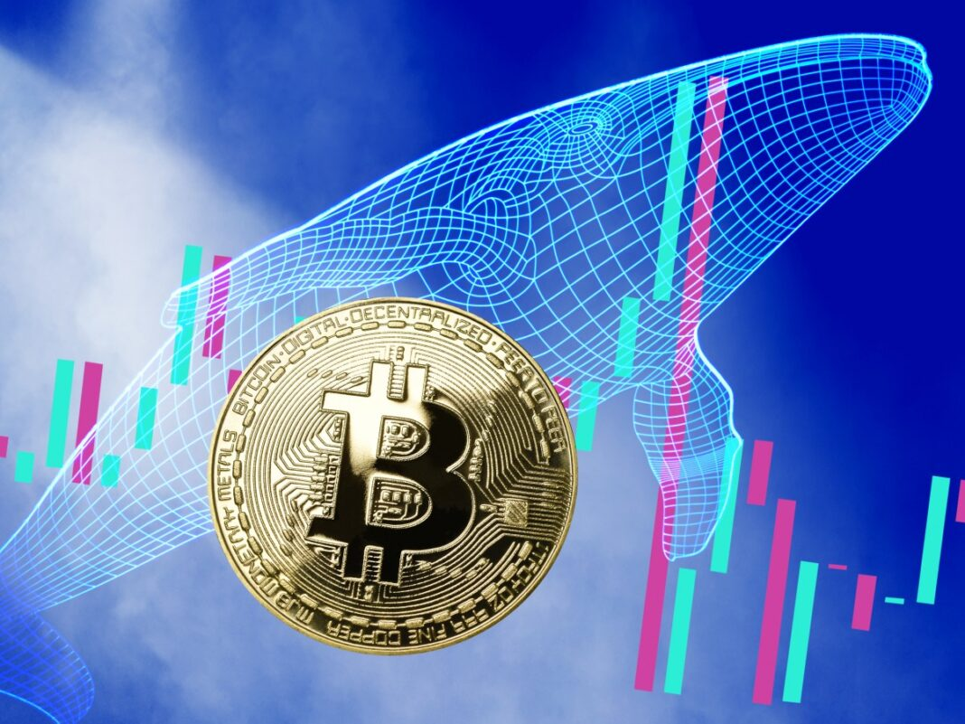 Las Ballenas Bitcoin inician abril movilizando 25.906 BTC