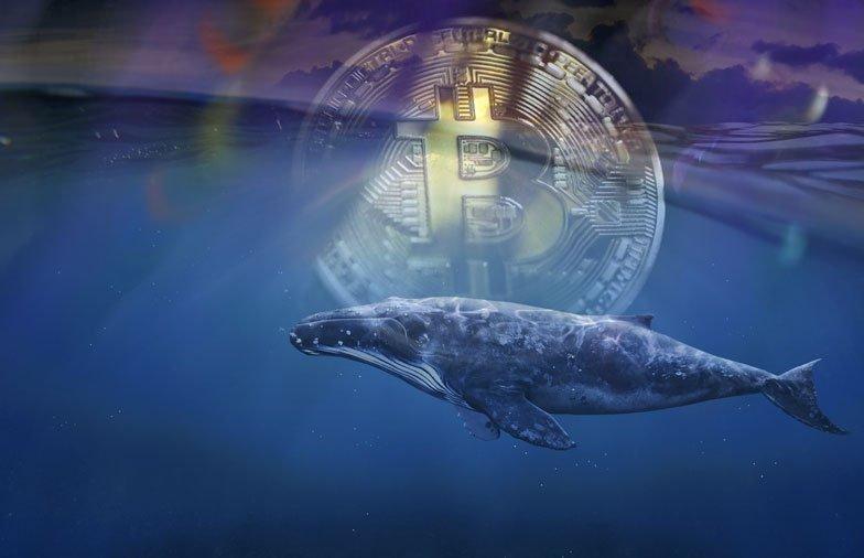Ballenas Bitcoin se mantienen activas este jueves mientras BTC cae