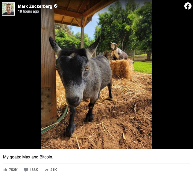 Cabras de Mark Zuckerberg, Max y Bitcoin. Fuente: Facebook.