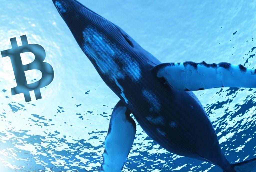 El fin de semana de las ballenas Bitcoin
