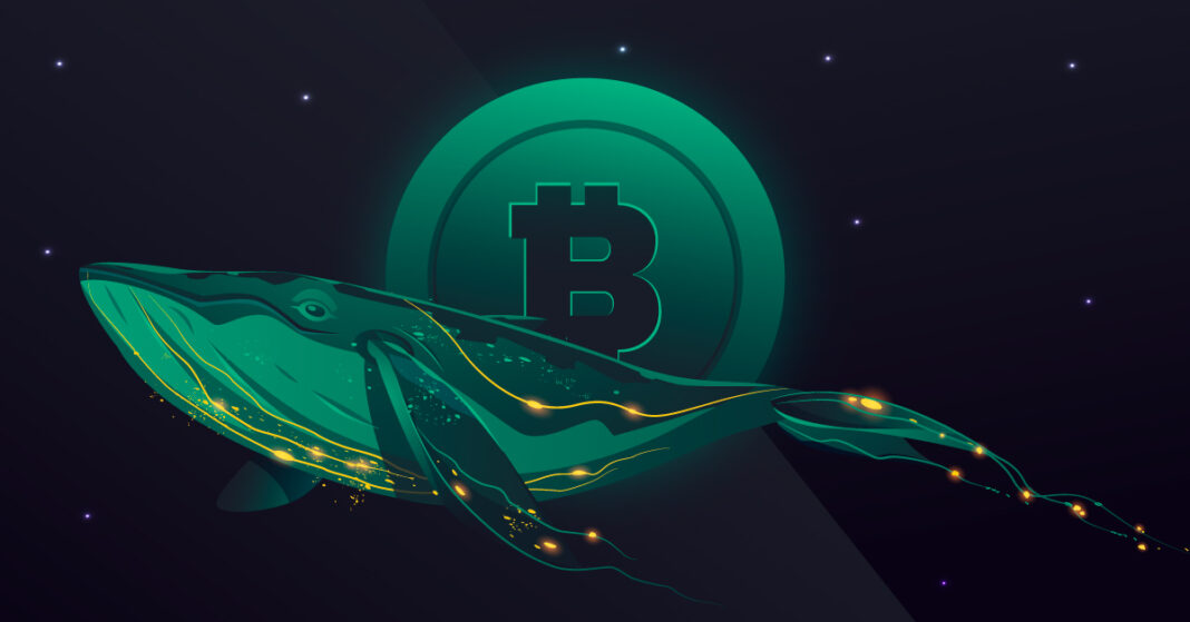 Qué movimientos han realizado las Ballenas Bitcoin en las últimas horas