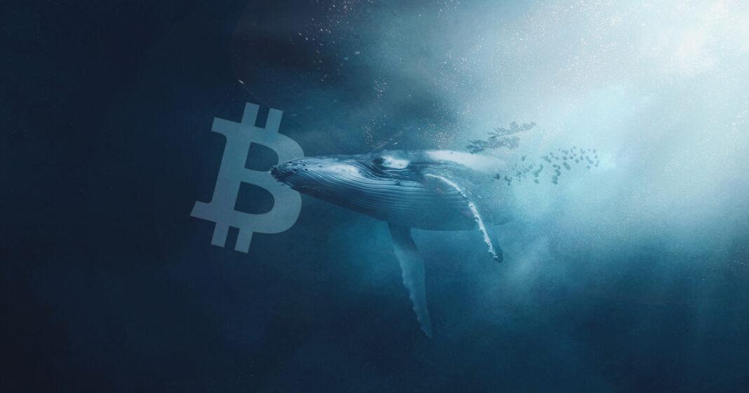 Ballenas Bitcoin desaceleran aún más su actividad con BTC 7.711 BTC movilizados en 24 horas