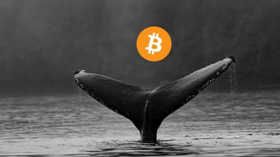 Ballenas Bitcoin en las últimas 24 horas hay tendencia de venta