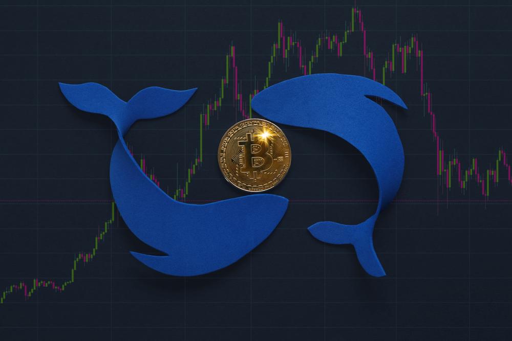 Ballenas Bitcoin en las últimas 48 horas