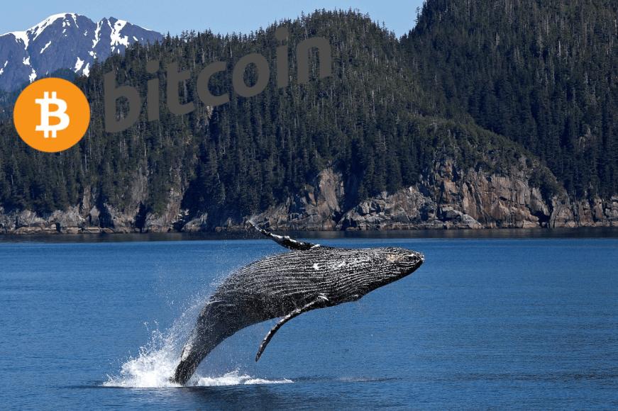 Ballenas Bitcoin ignoran noticias negativas y siguen acumulando