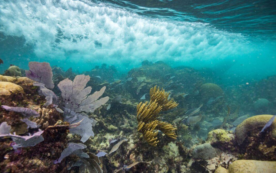 Los bonos azules la protección del océano es la protección del planeta